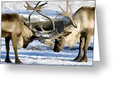 Bull Elk Fighting  Greeting Card