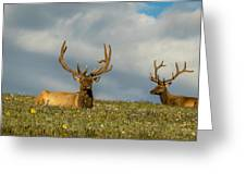 Bull Elk Friends For Now Greeting Card