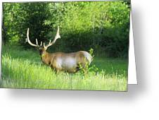 Bull Elk In Velvet  Greeting Card by Jeff Swan