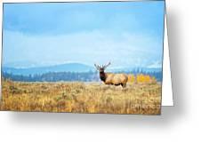 Bull Elk Meadow Greeting Card