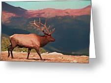 Bull Elk On Trail Ridge Road Greeting Card