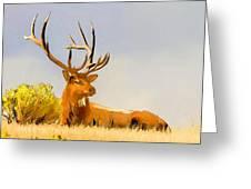 Bull Elk Resting In The Grass Greeting Card