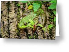 Bull Frog On A Log Greeting Card