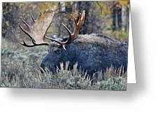 Bull Moose 02 Greeting Card