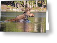 Bull Moose Goes For A Swim Greeting Card