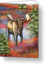 Bull Moose In Fall Greeting Card