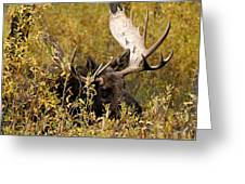 Bull Moose In Hiding Greeting Card