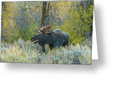 Bull Moose In The Evening Greeting Card