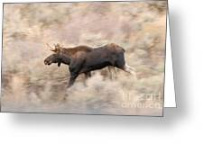 Bull Moose On The Run Greeting Card