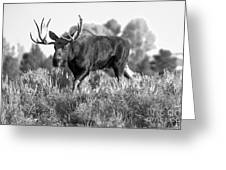 Bull On A Blue Sky Day Black And White Greeting Card