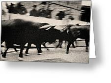 Bull Run 3 Greeting Card