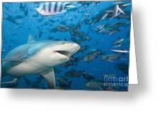 Bull Shark Greeting Card