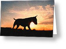 Bull Terrier At Sunset Greeting Card