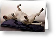 Bull Terrier Dreams Greeting Card by Michael Tompsett