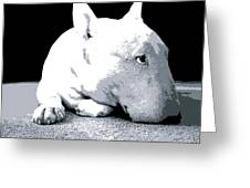 Bull Terrier White On Black Greeting Card by Michael Tompsett