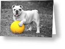 Bulldog Soccer Greeting Card