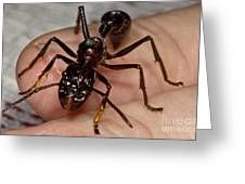 Bullet Ant On Hand Greeting Card