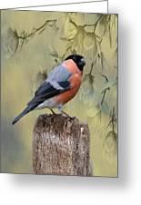 Bullfinch Bird Greeting Card