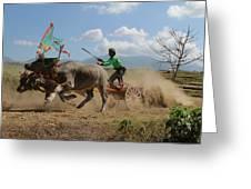 Bullrace  Greeting Card