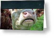 Bull's Eye Peek A Boo Deekflo Greeting Card