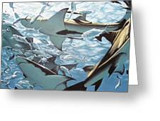 Bullsharks Greeting Card