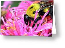 Bumble Bee And Flower Greeting Card