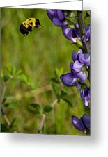 Bumble Bee And Milk-vetch Greeting Card