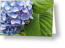 Bumble Bee Blues Greeting Card