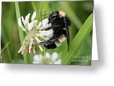 Bumble Bee By The Pond Greeting Card