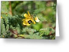 Bumblebee Deep Into Work Greeting Card