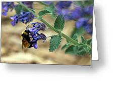 Bumble Bee Delight Greeting Card