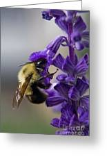 Bumble Bee Doing Lunch Greeting Card