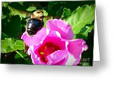Bumble Bee Flying To Flower Greeting Card
