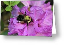 Bumble Bee On Rhododendron Blossoms Greeting Card