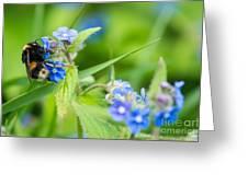 Bumble Bee On Siberian Bugloss Greeting Card