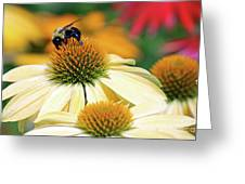 Bumble Bee On Top Greeting Card