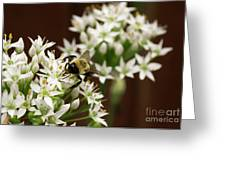 Bumble Bee On Wild Onion Flower Greeting Card