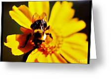 Bumble Bee On Yellow Flower Greeting Card