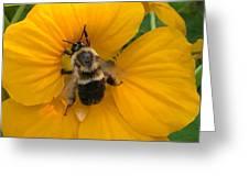 Bumble Bee On Yellow Nasturtium Greeting Card