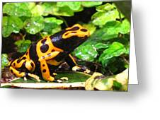 Bumble Bee Poison Frog Greeting Card
