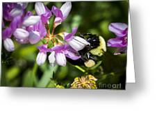 Bumble Bee Pollinating A Flower Greeting Card