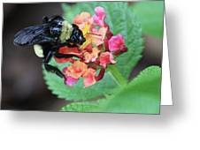 Bumble Bee Square Greeting Card