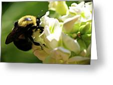 Bumble Bee Greeting Card by Valeria Donaldson