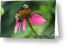 Bumble Bees At Work Greeting Card