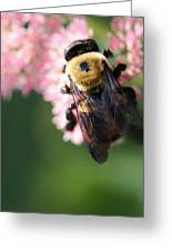 Bumble From Above Greeting Card