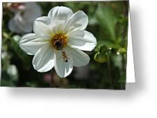 Bumblebee And Bee Greeting Card