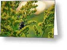 Bumblebee And Canadian Goldenrod 15 Greeting Card