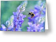 Bumblebee And Lupine Greeting Card
