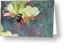 Bumblebee Before Dawn 2 Greeting Card