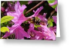 Bumblebee In Azalea Greeting Card
